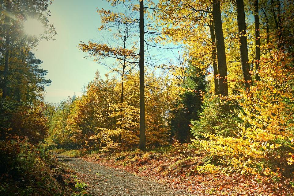 Landscape, Nature, Autumn, Forest, Forest Path