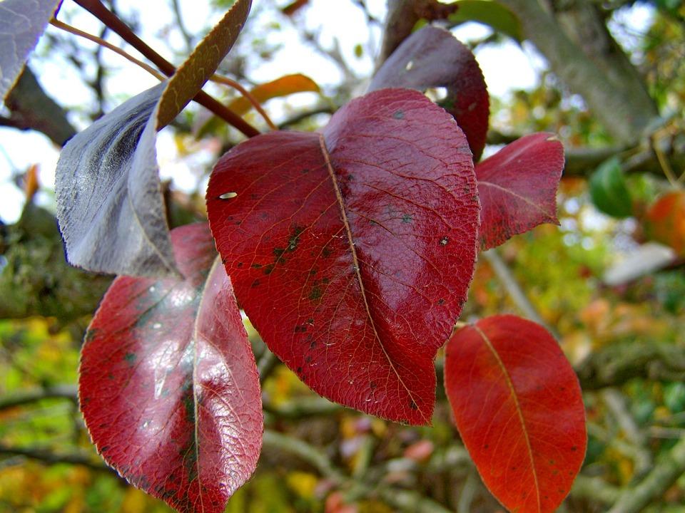 Autumn, Discoloration, Nature, Impermanence