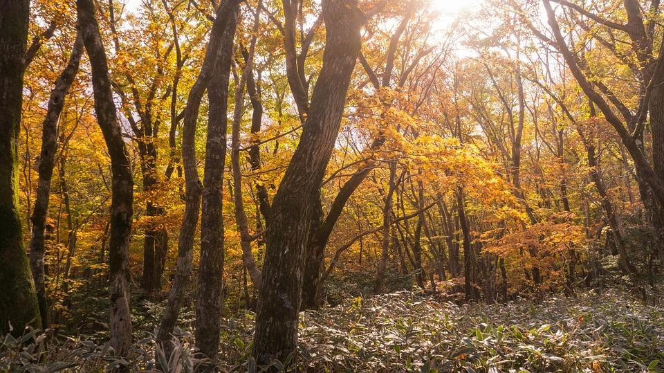 Autumn, Autumn Leaves, Wood, Forest, Nature, Landscape