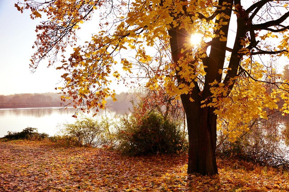 Landscape, Autumn Landscape, Nature, Riverside