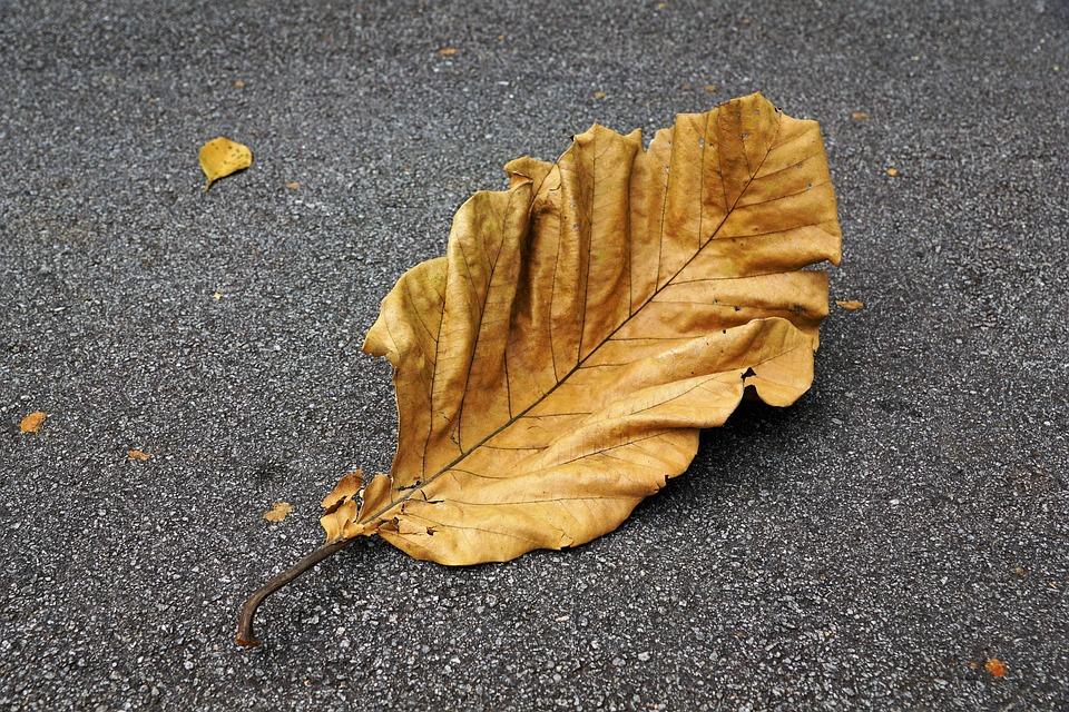 Autumn, Leaf, Nature, Asphalt, Background, Maple