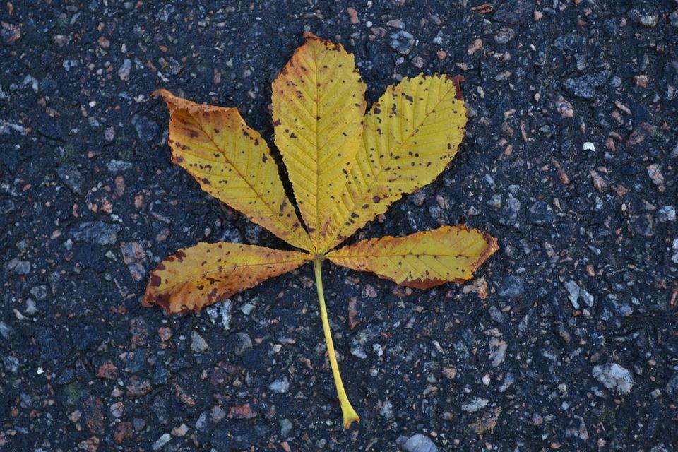 Autumn Leaves, Leave, Tree, Autumn, Fall, Nature
