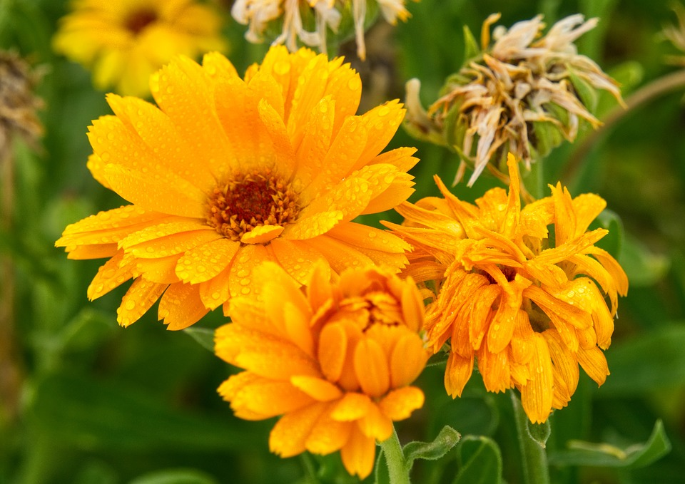 Flower, Flourished, Orange, Bloom, Autumn, Nature