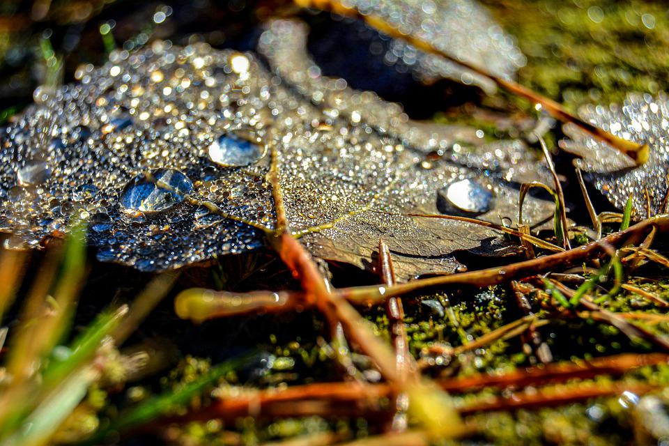 Leaf, Autumn, Pearls, Nature, Pattern, Summer, Water