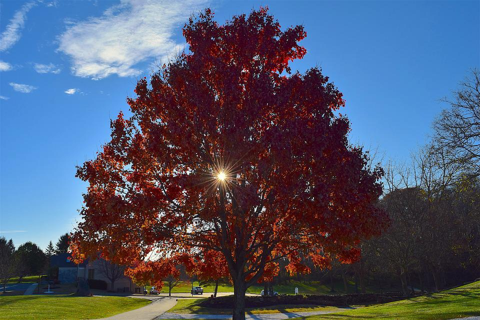 Tree, Foliage, Autumn, Sunlight, Nature, Season, Fall