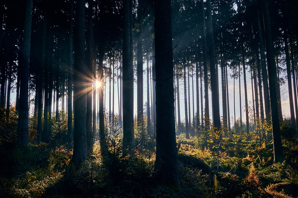 Backlighting, Autumn, Morning, Sunrise, Forest, Nature