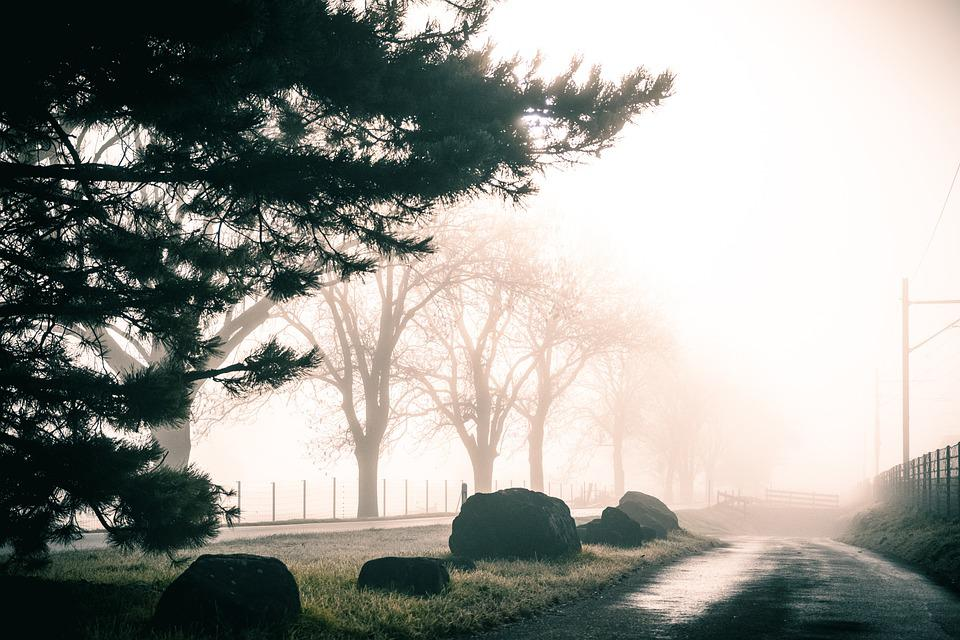 Trees, Road, Fog, Pathway, Trail, Autumn, Nature