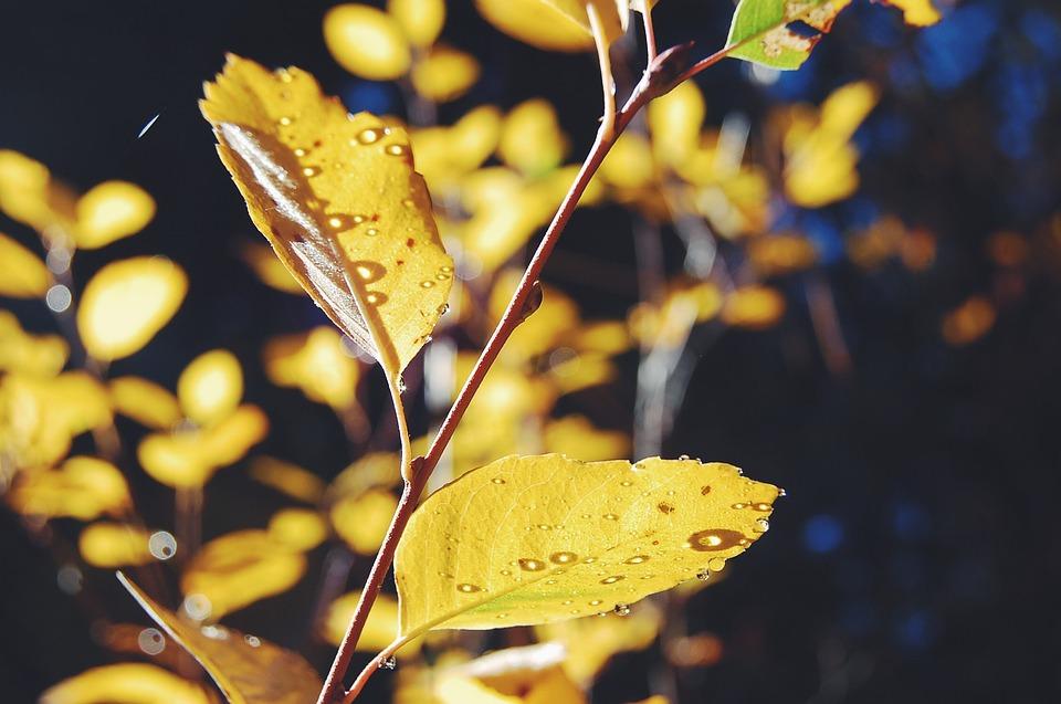 Autumn, Leaves, Fall, Leaf, Nature, Autumn Leaves, Tree