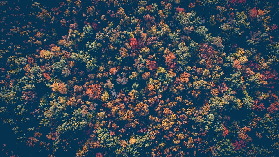 Forest, Nature, Trees, Woods, Aerial View, Autumn, Fall