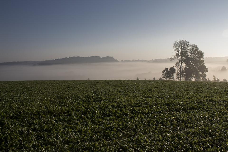 Morgenstimmung, Fog, Landscape, Nature, Trees, Autumn