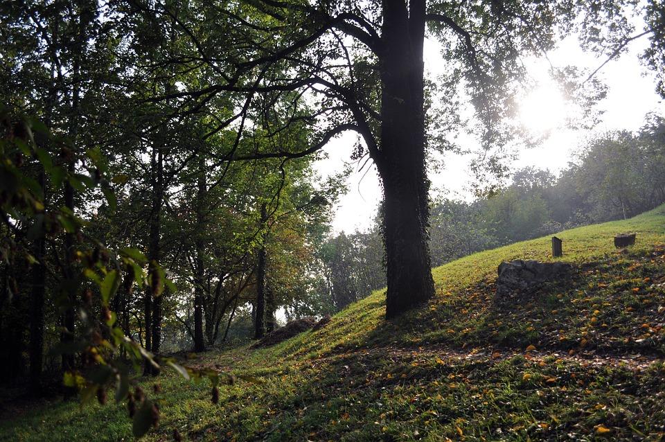Autumn, Trees, Public Park, Nature