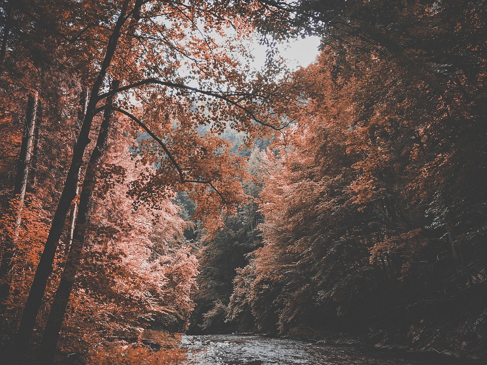 Autumn, Forest, Nature, River, Trees, Water
