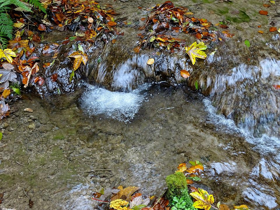 Water, Bach, Autumn, Waterfall, Forest, Nature