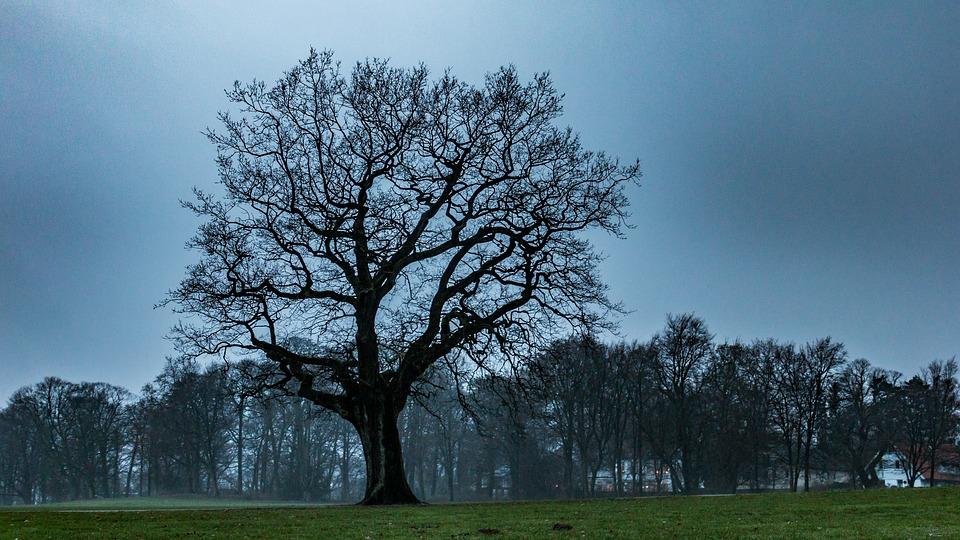 Tree, Oak, Nature, Wood, Autumn, Forest, Landscape
