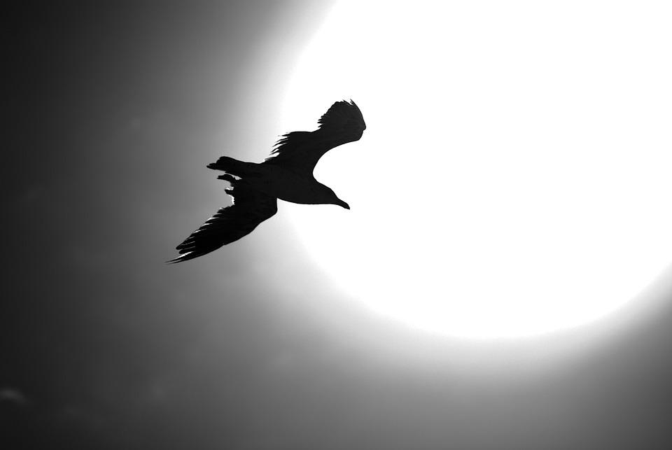 Ave, Sky, Bird, Flight, Seagull, Fly, Wings, Nature