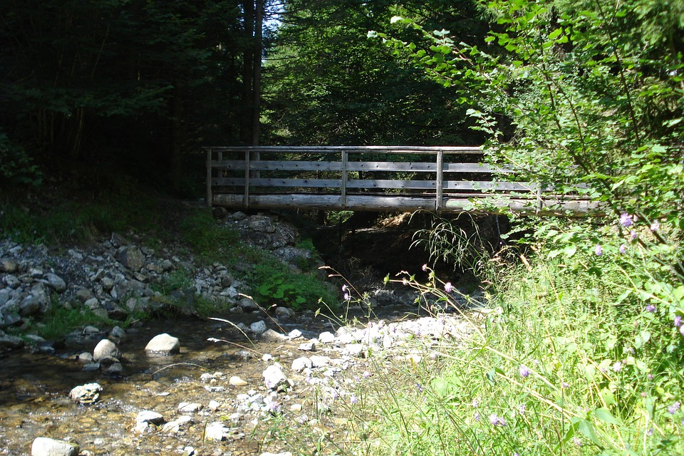 Bach, Bridge, Summer, Nature, Water, Bridge Brook