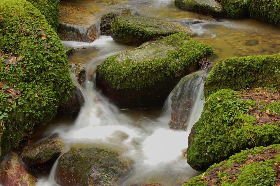 Water, Bach, Nature, Landscape, Murmur, Forest