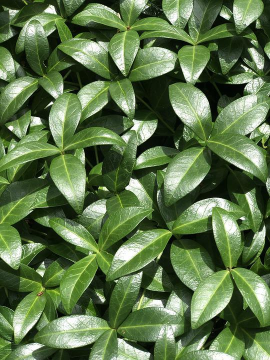 Green, Plant, Nature, Leaf, Background, Environment