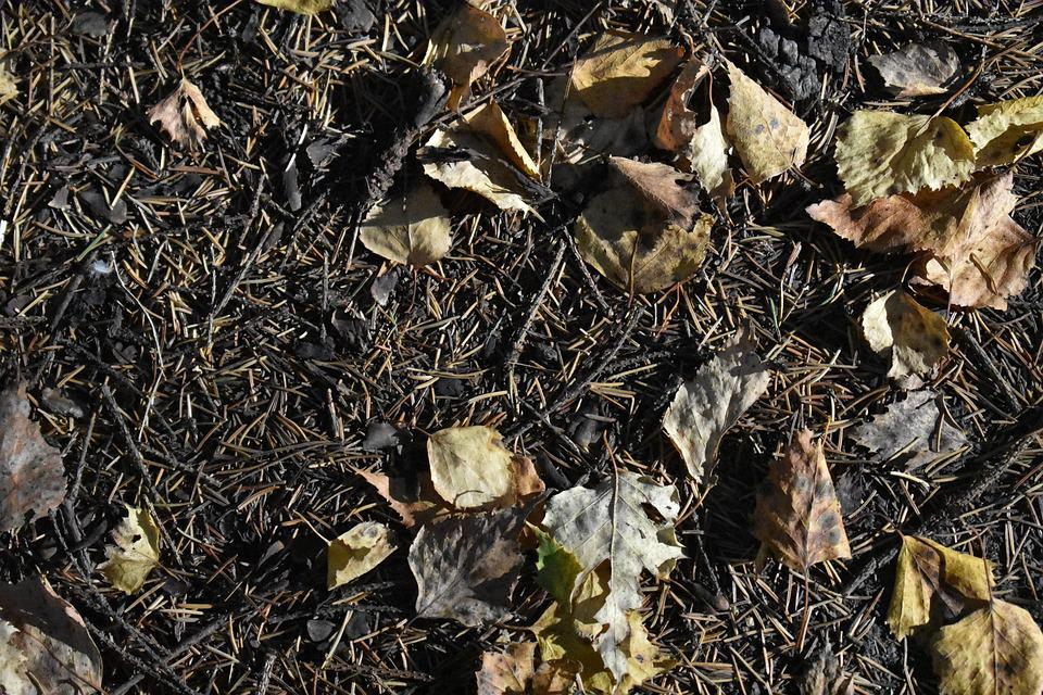 Foliage, Leaves, Fallen, Background, Texture, Nature