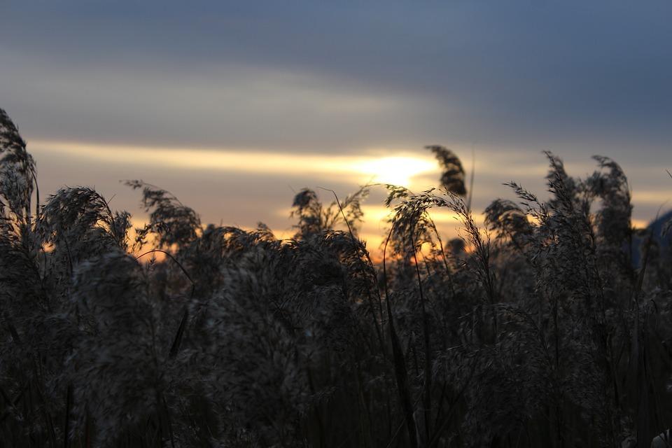 Sunset, Reed, Glow, Nature, Sky, Autumn, Background