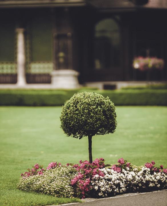 Garden, Park, Bäumchen, Rain, Nature, Plant, Summer