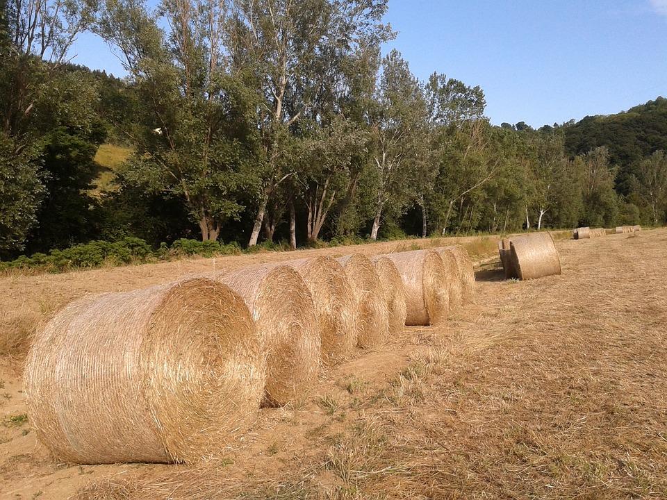 Bales, Straw, Campaign, Landscape, Sky, Ancon, Nature