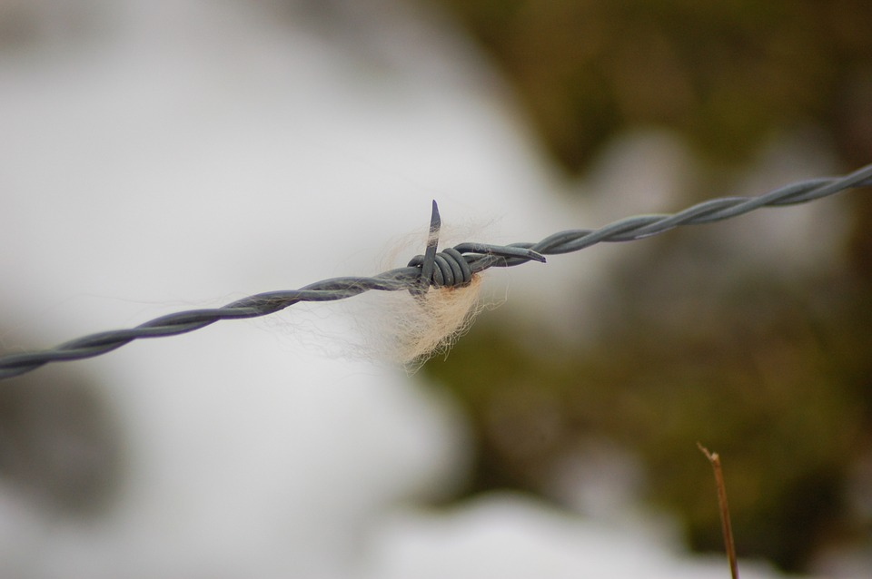 Barbed Wire, Fur, Nature, Depth Of Field
