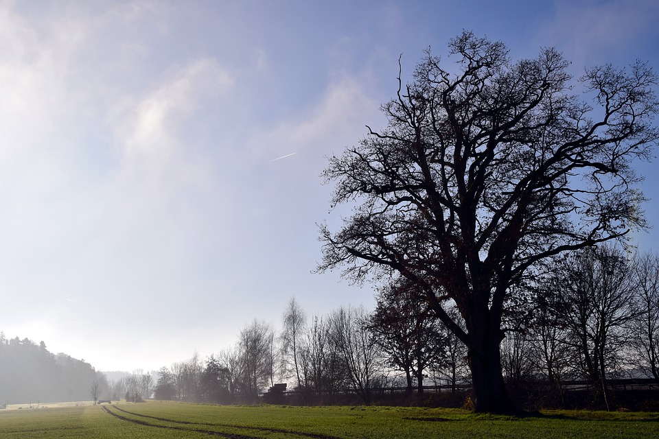 Tree, Landscape, Nature, Fog, Winter, Kahl, Bare Tree