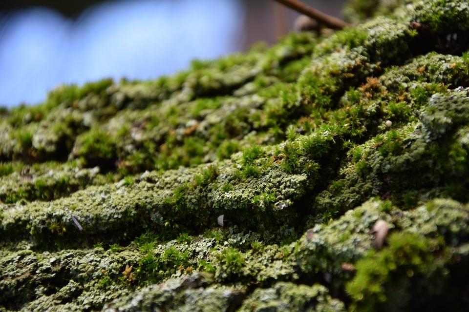 Bark, Green, Tree, Plant, Nature, Moss, Wood, Tree Bark