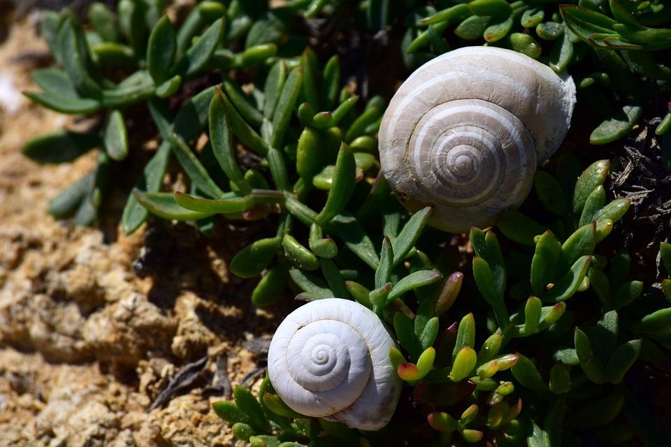 Beach, Shell, Vegetation, Coast, Nature, Rock
