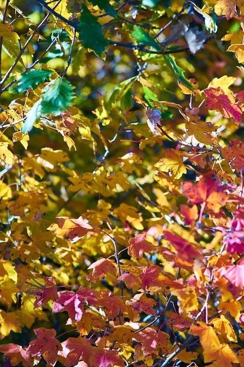 Autumn, Season, Landscape, Nature, Beautiful