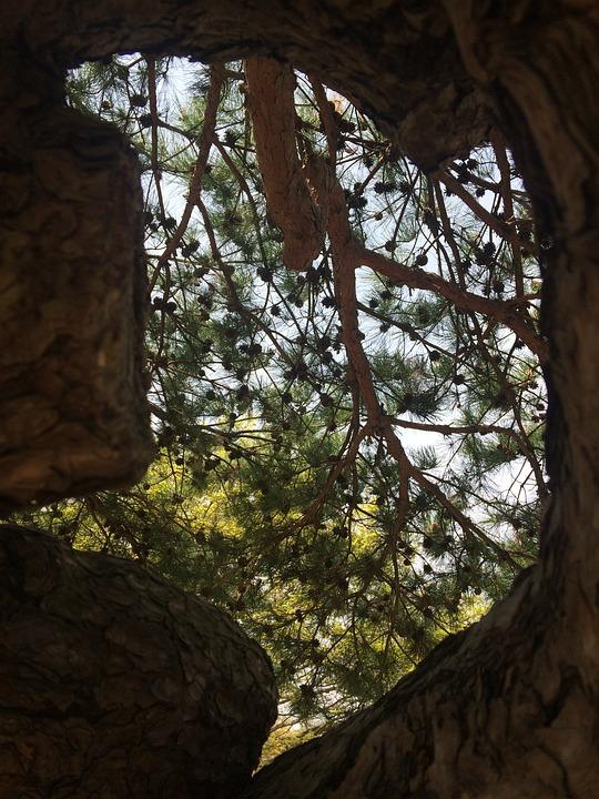 Wood, Nature, Park, Beautiful, Scenery