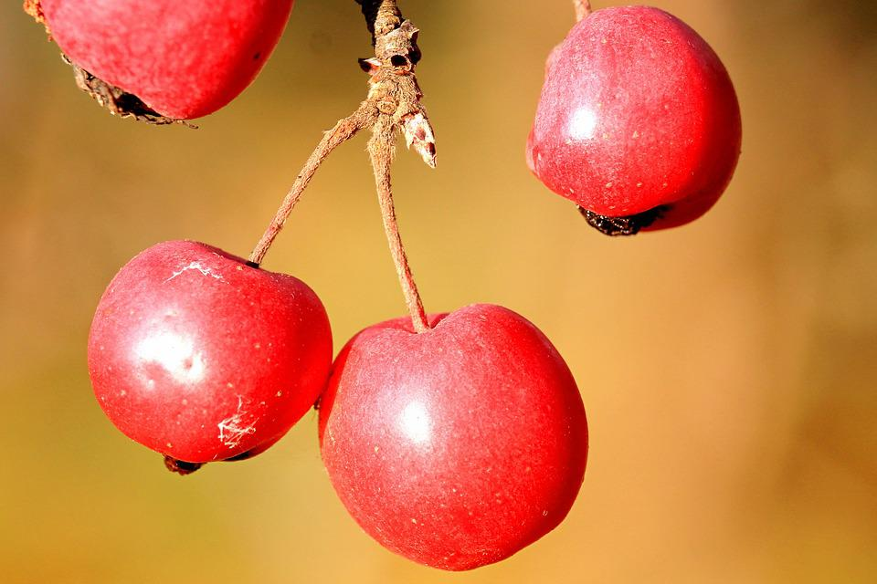 Berries, Berry Red, Red, Autumn, Nature, Plant