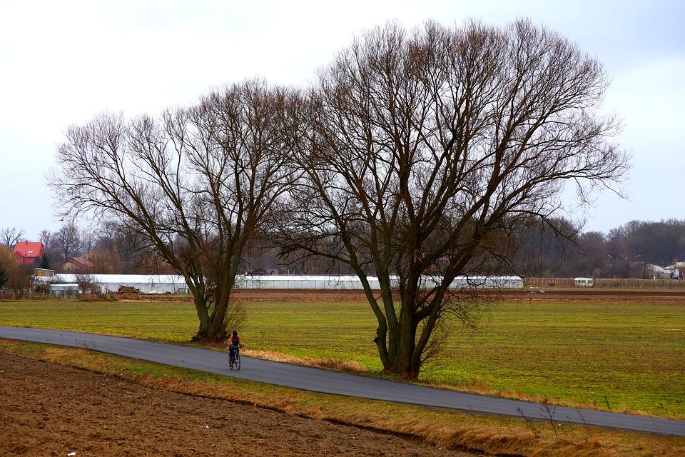 Village, Tree, View, Bike, Nature, Field, Way, Poland