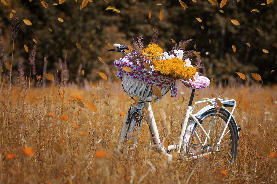 free photo nature bike forest flowers autumn bicycle