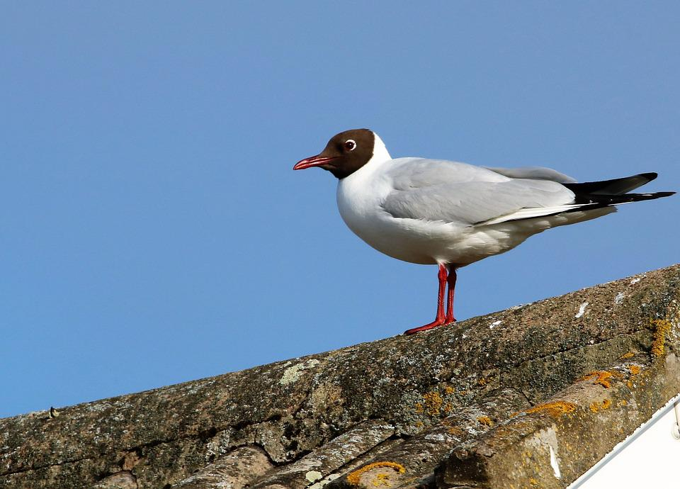 Seagull, Bird, Nature, Gull, Sea, Water, Seabird, Beach