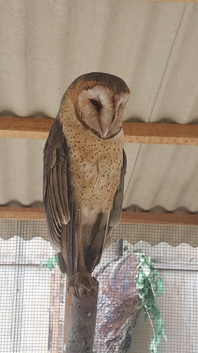 Bird, Nature, Animal, Feather