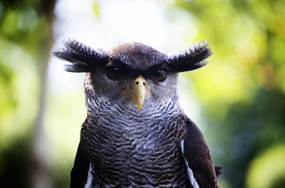 Owl, Close Up, Bird, Head, Nature, Stare, Look