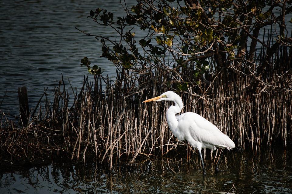 Waters, Bird, Lake, Nature, Heron, Swamp, Wildlife