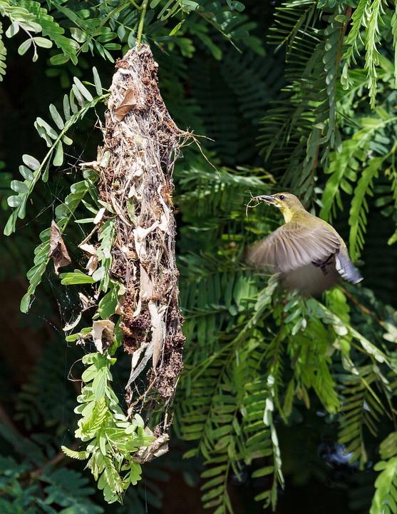 Nature, Bird, Home