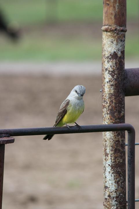 Bird, Nature, Wildlife, Outdoors