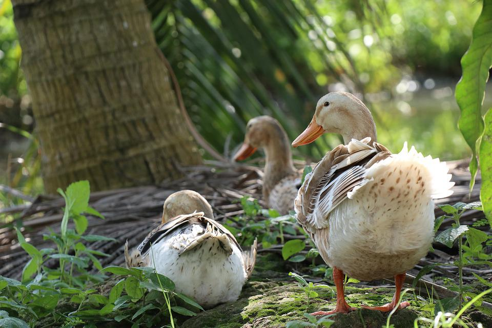 Duck Tail, River, Pond, Bird, Nature, Swimming, Park
