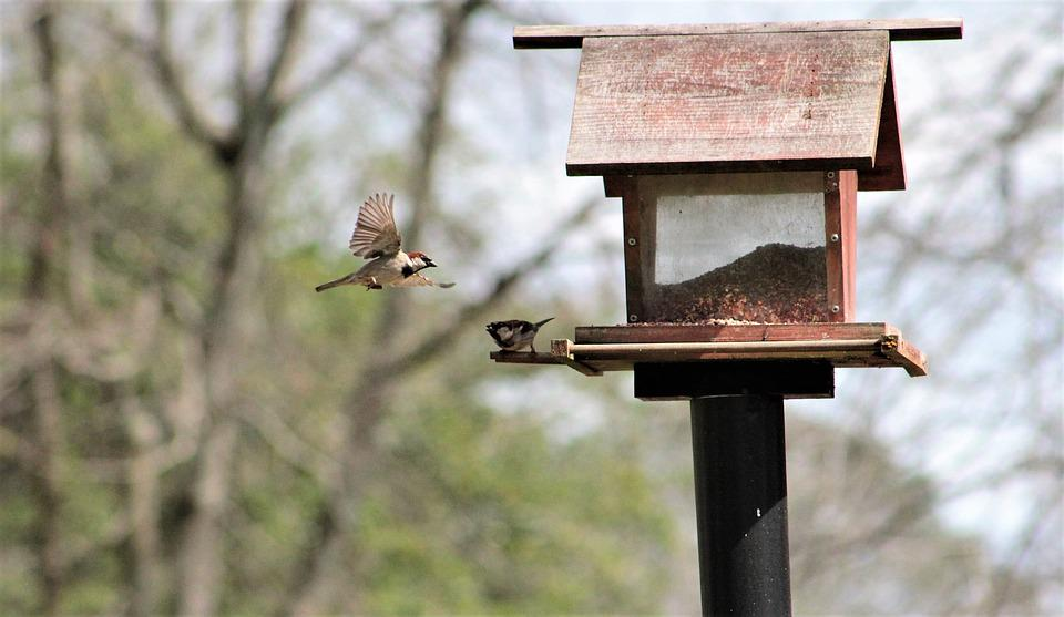 Feeder, Sparrow, Tree Sparrow, Bird, Nature