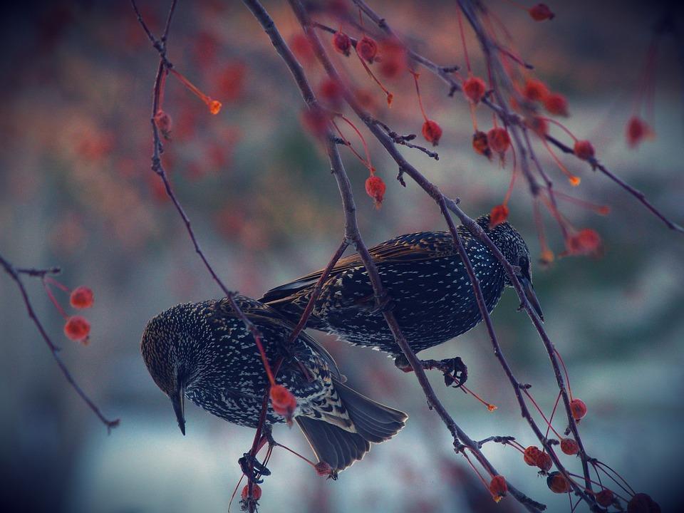 Nature, Bird, Wildlife, Tree, Outdoors