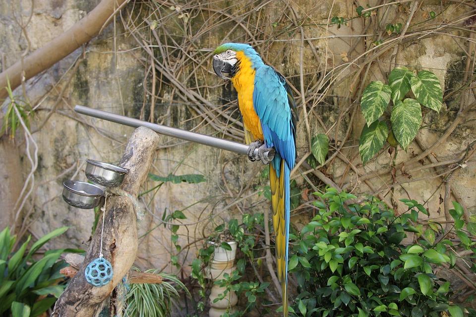 Bird, Nature, Tropical, Wildlife, Wood, Parrot, Exotic