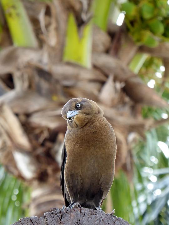 Animal World, Nature, Bird, Animal, Sit, Wood, Tropical