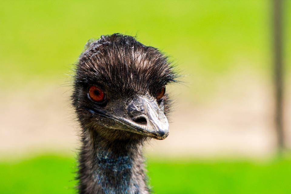 Ostrich, Zoo, Bird, Closeup, Nature