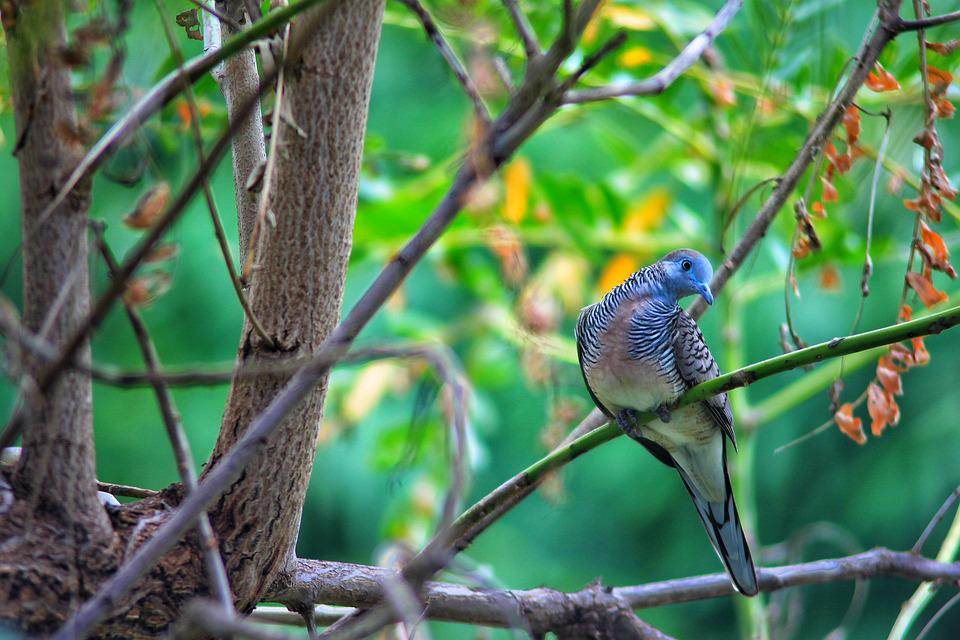 Birds, Animals, Nature, Dove
