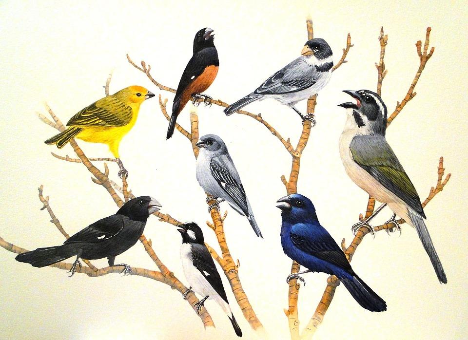 Birds, Nature, Brazil
