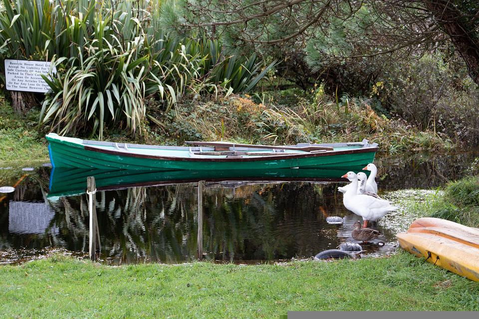 Canoe, River, Geese, Birds, Nature, Forest, Woods, Boat